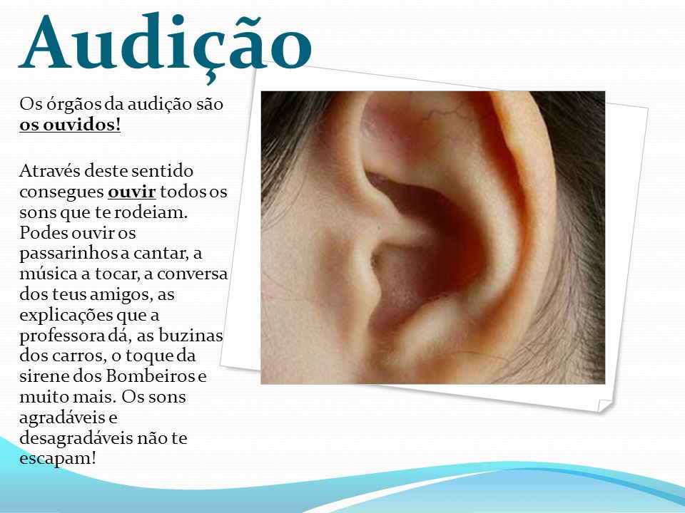 Audição Os órgãos da audição são os ouvidos!
