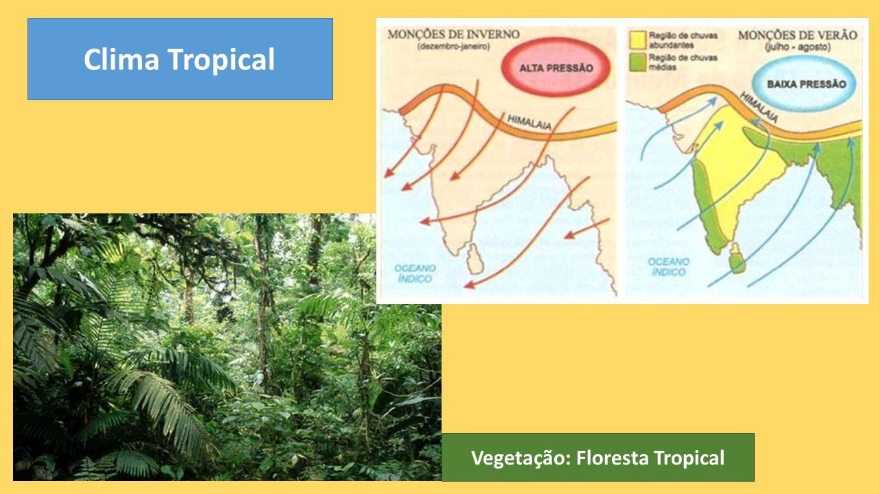 Vegetação: Floresta Tropical