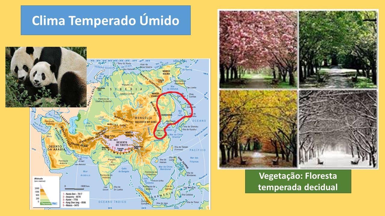 Vegetação: Floresta temperada decidual