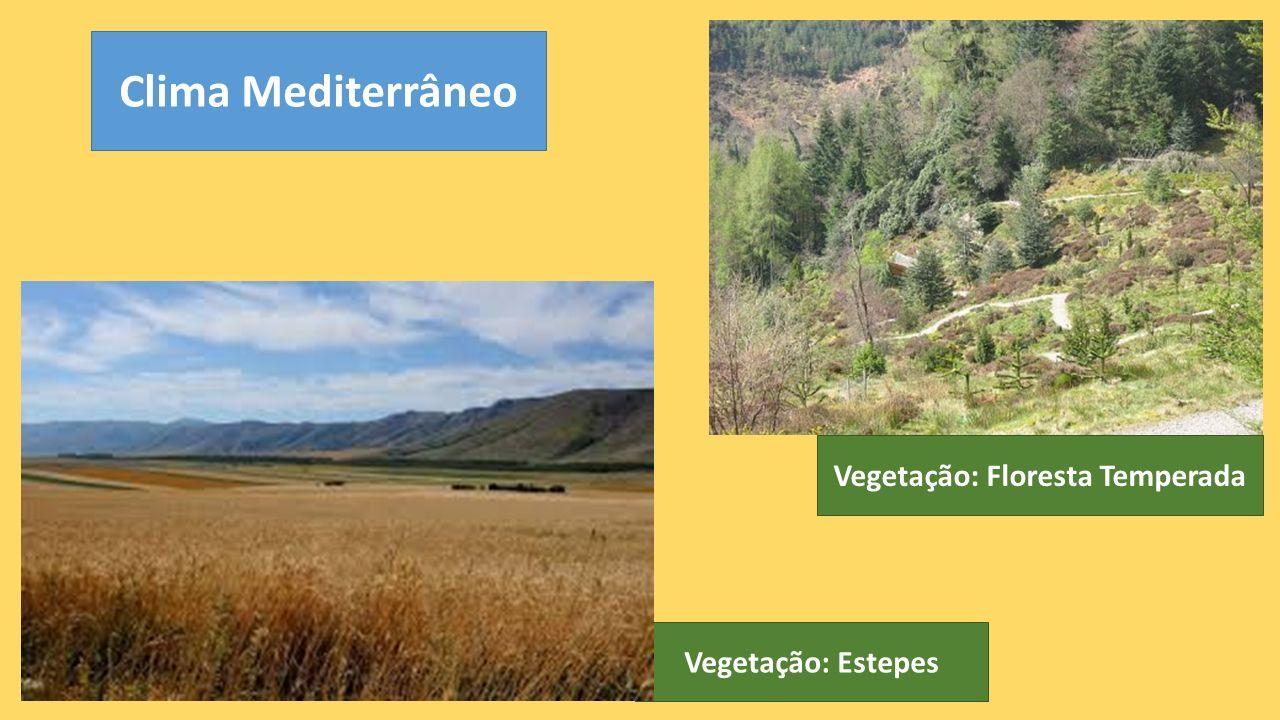 Vegetação: Floresta Temperada