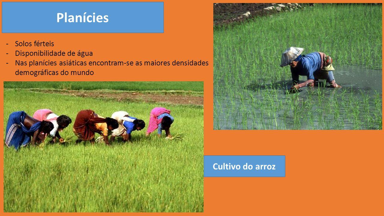 Planícies Cultivo do arroz Solos férteis Disponibilidade de água