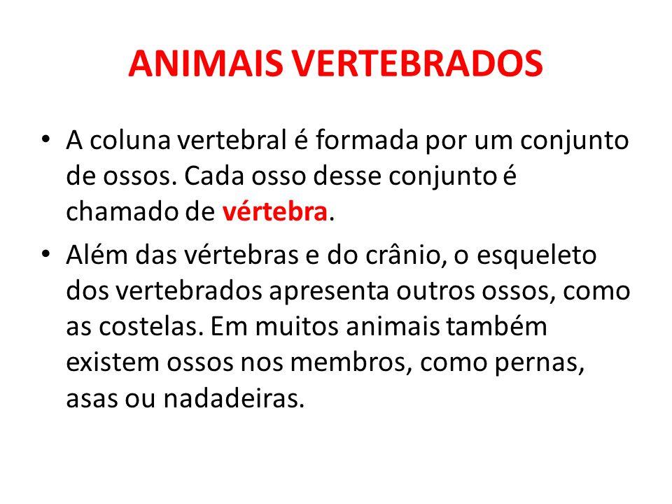 ANIMAIS VERTEBRADOS A coluna vertebral é formada por um conjunto de ossos. Cada osso desse conjunto é chamado de vértebra.