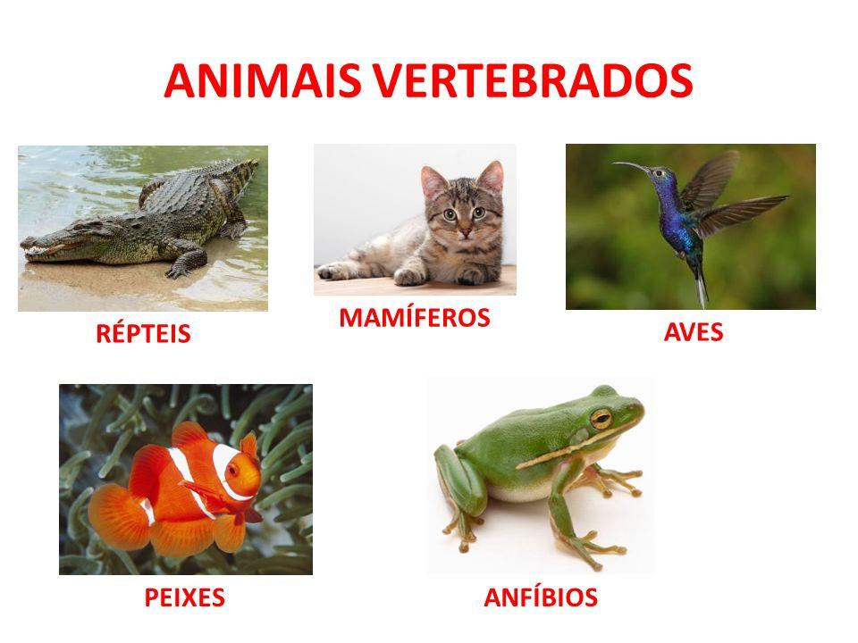 ANIMAIS VERTEBRADOS MAMÍFEROS RÉPTEIS AVES PEIXES ANFÍBIOS