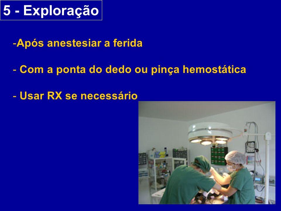 5 - Exploração Após anestesiar a ferida