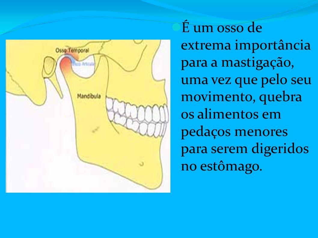 Anatomia da cabe a ppt carregar for O osso esterno e dividido em