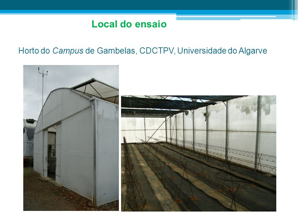 Local do ensaio Horto do Campus de Gambelas, CDCTPV, Universidade do Algarve