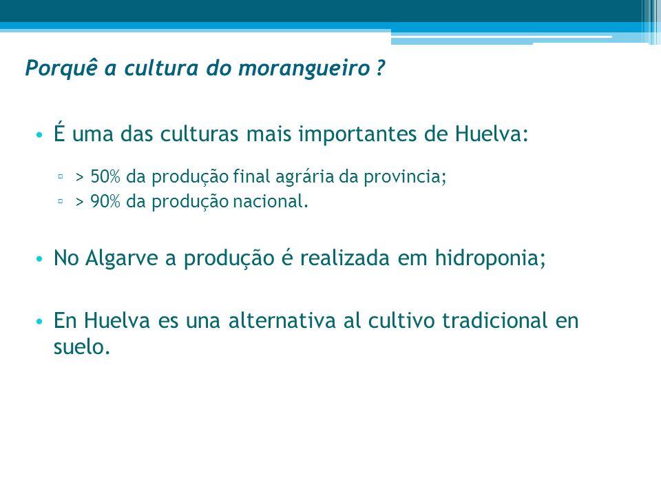 Porquê a cultura do morangueiro