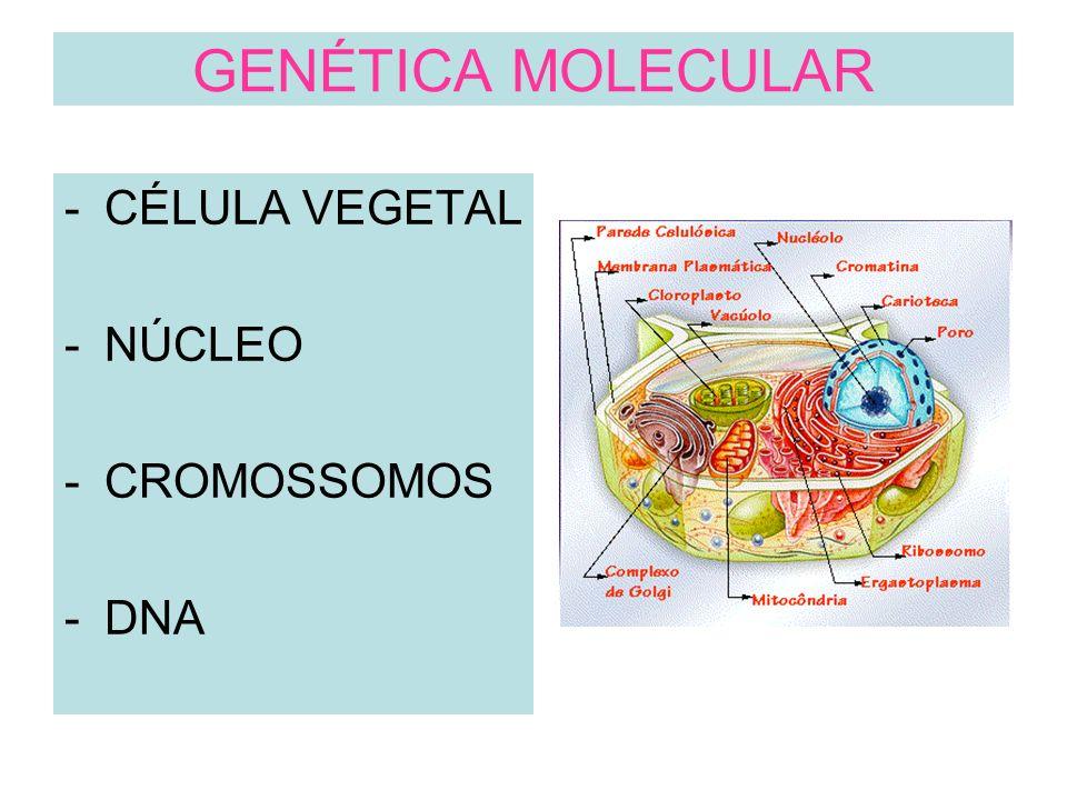 GENÉTICA MOLECULAR CÉLULA VEGETAL NÚCLEO CROMOSSOMOS DNA