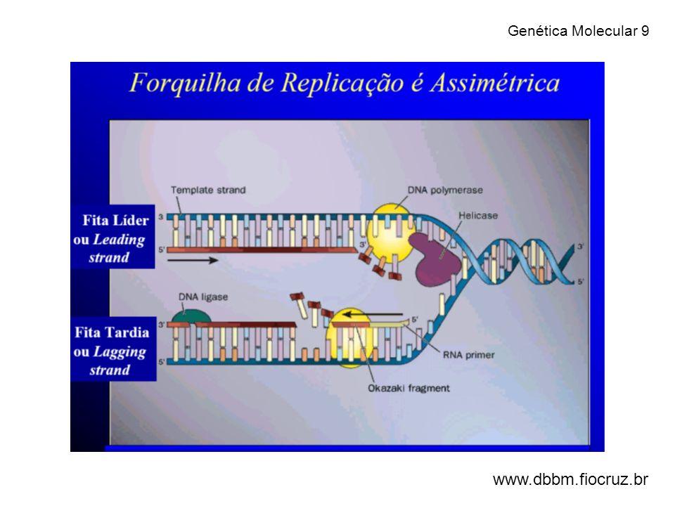 Genética Molecular 9 www.dbbm.fiocruz.br