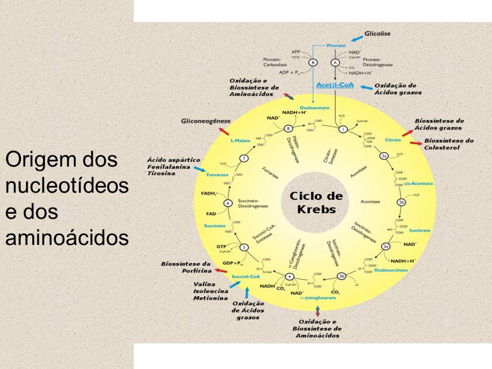 Origem dos nucleotídeos e dos aminoácidos