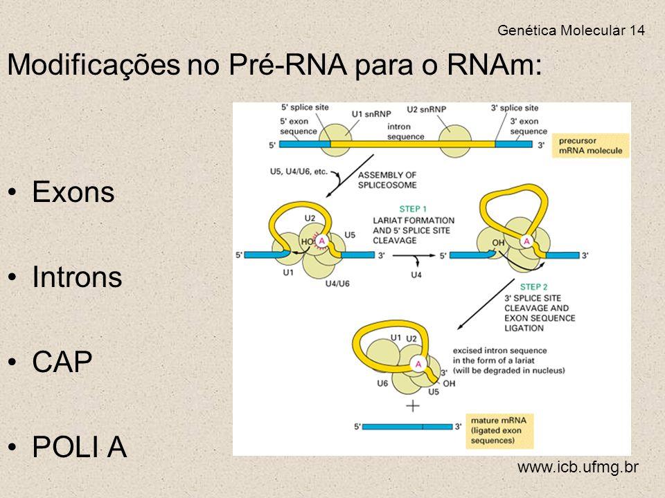 Modificações no Pré-RNA para o RNAm: