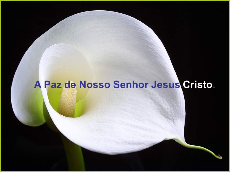 A Paz de Nosso Senhor Jesus Cristo.