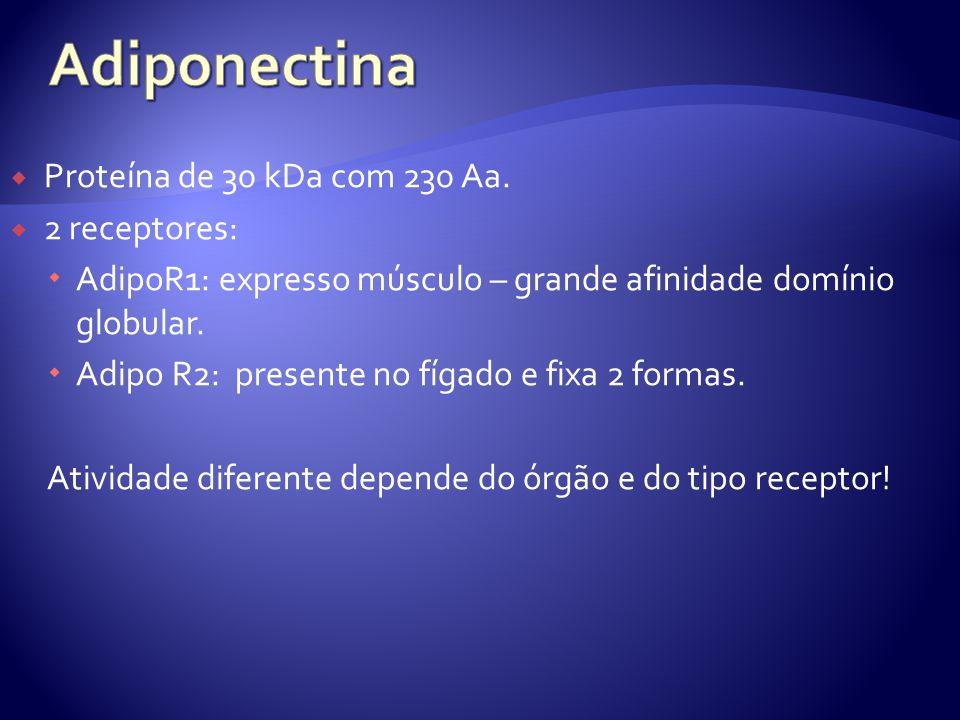 Adiponectina Proteína de 30 kDa com 230 Aa. 2 receptores:
