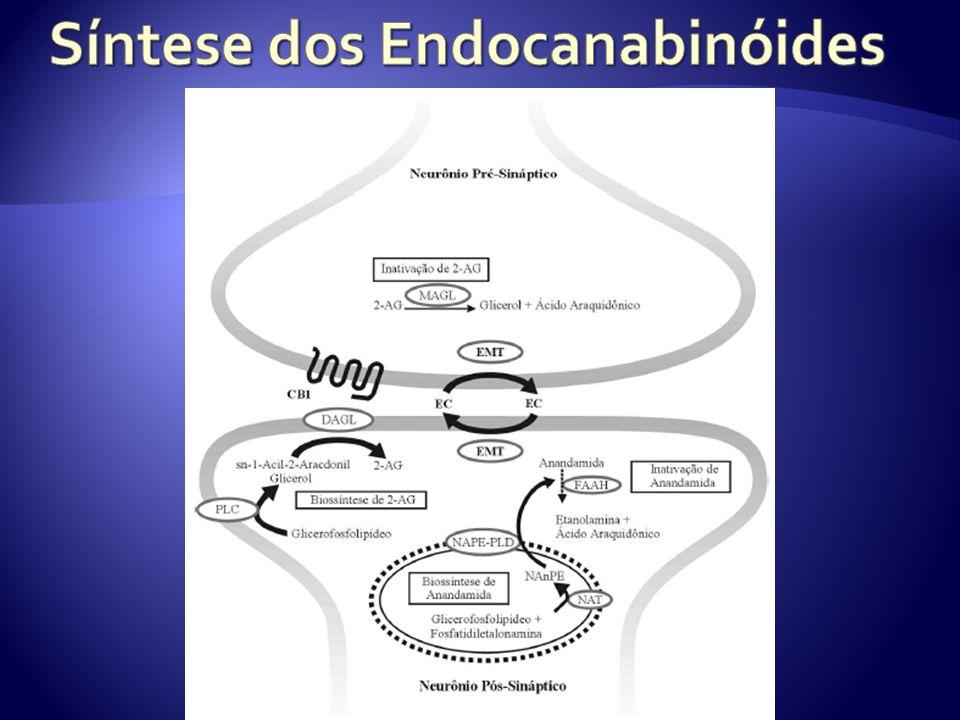 Síntese dos Endocanabinóides