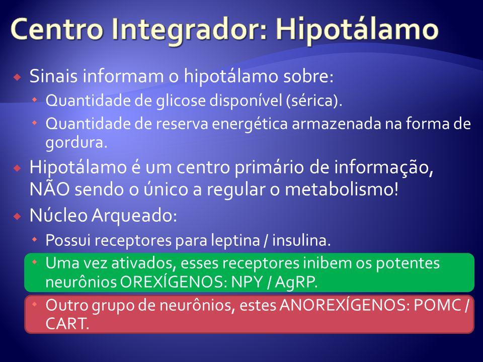 Centro Integrador: Hipotálamo