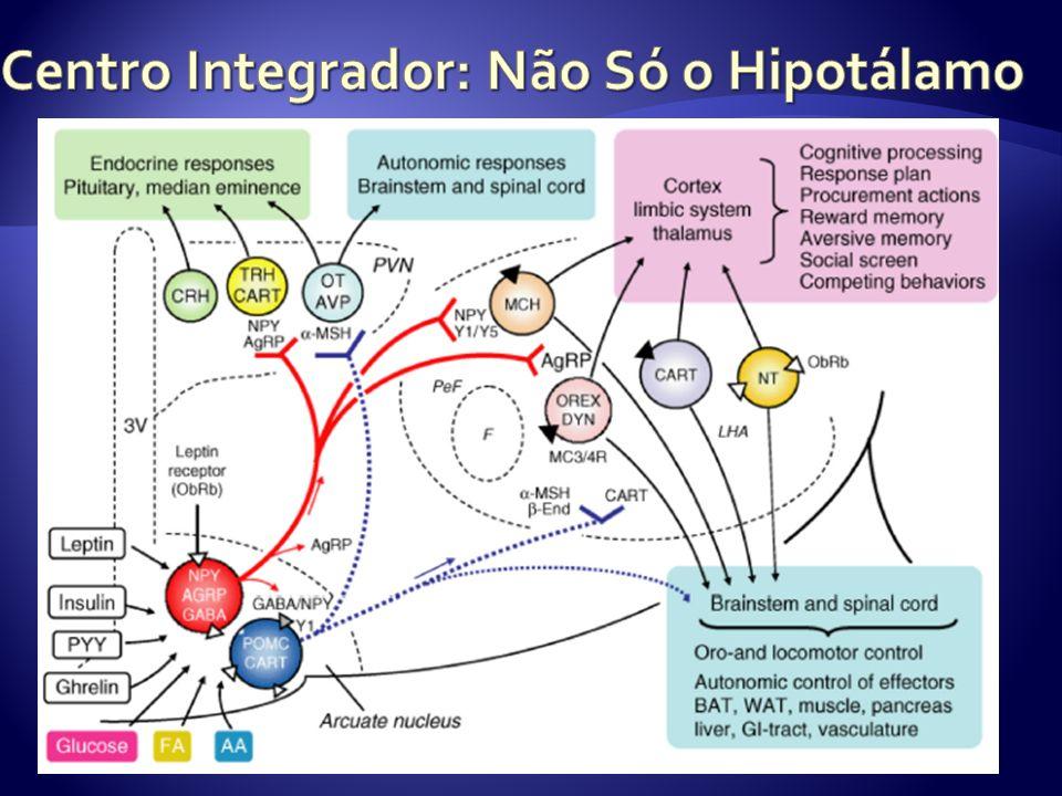 Centro Integrador: Não Só o Hipotálamo