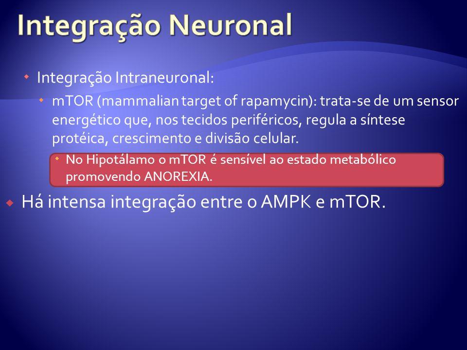 Integração Neuronal Há intensa integração entre o AMPK e mTOR.