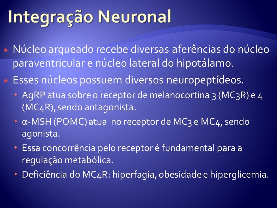Integração Neuronal Núcleo arqueado recebe diversas aferências do núcleo paraventricular e núcleo lateral do hipotálamo.