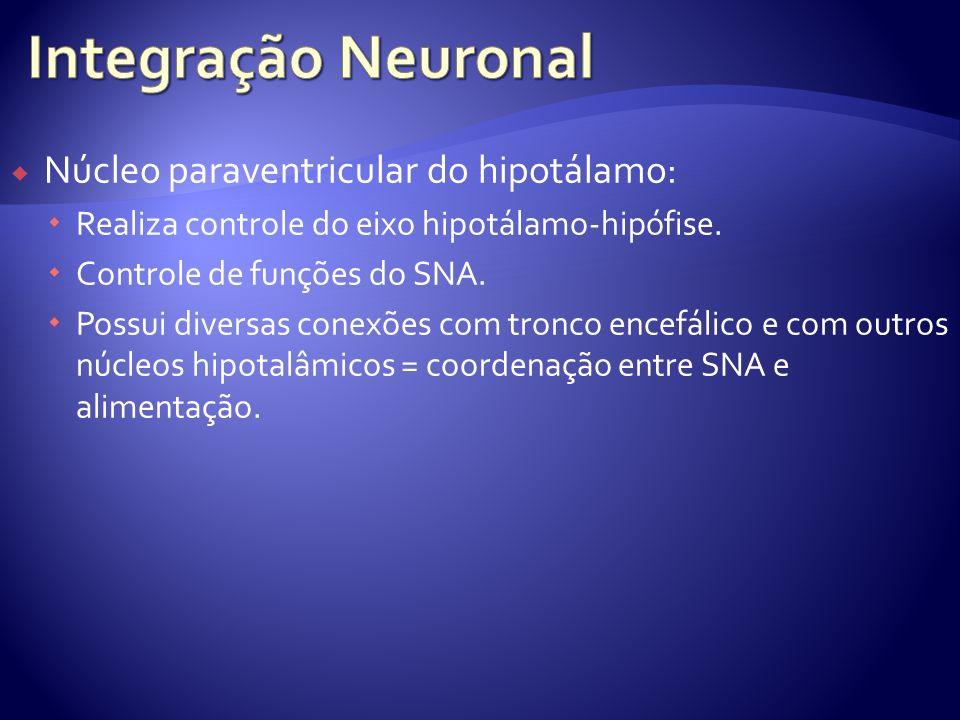 Integração Neuronal Núcleo paraventricular do hipotálamo: