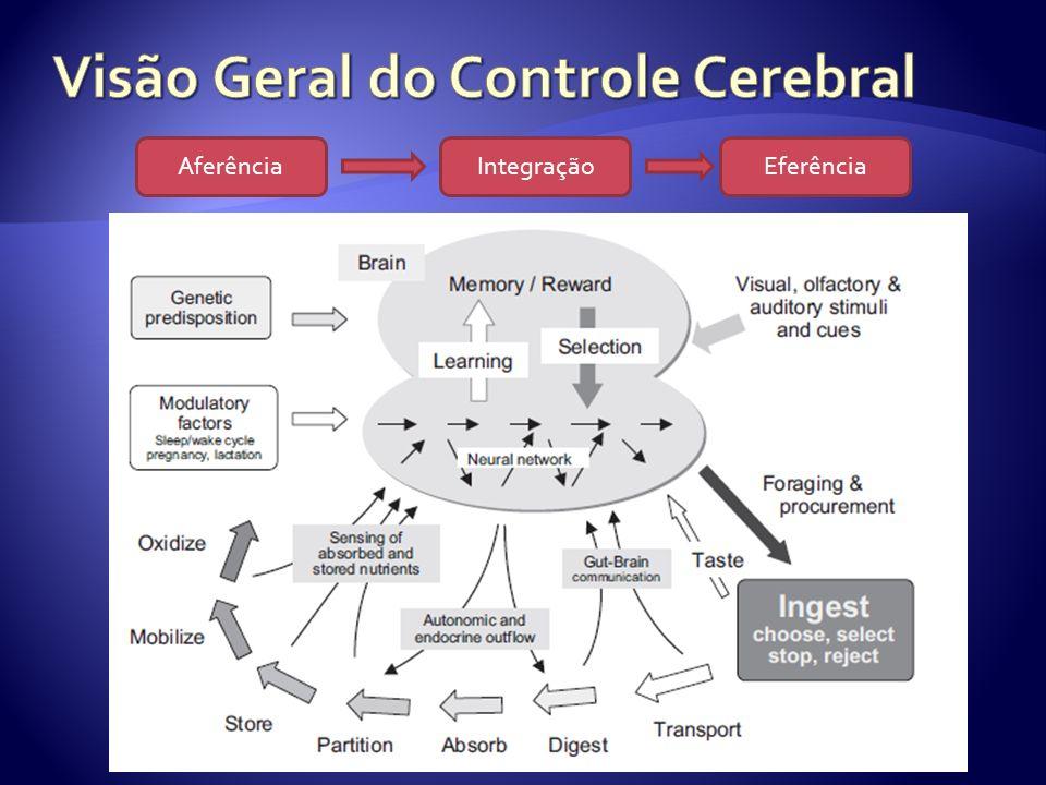 Visão Geral do Controle Cerebral