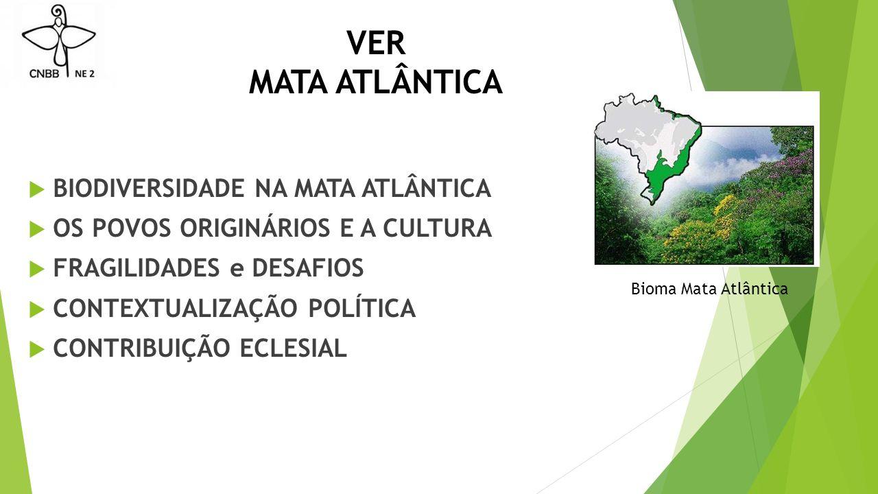 VER MATA ATLÂNTICA BIODIVERSIDADE NA MATA ATLÂNTICA