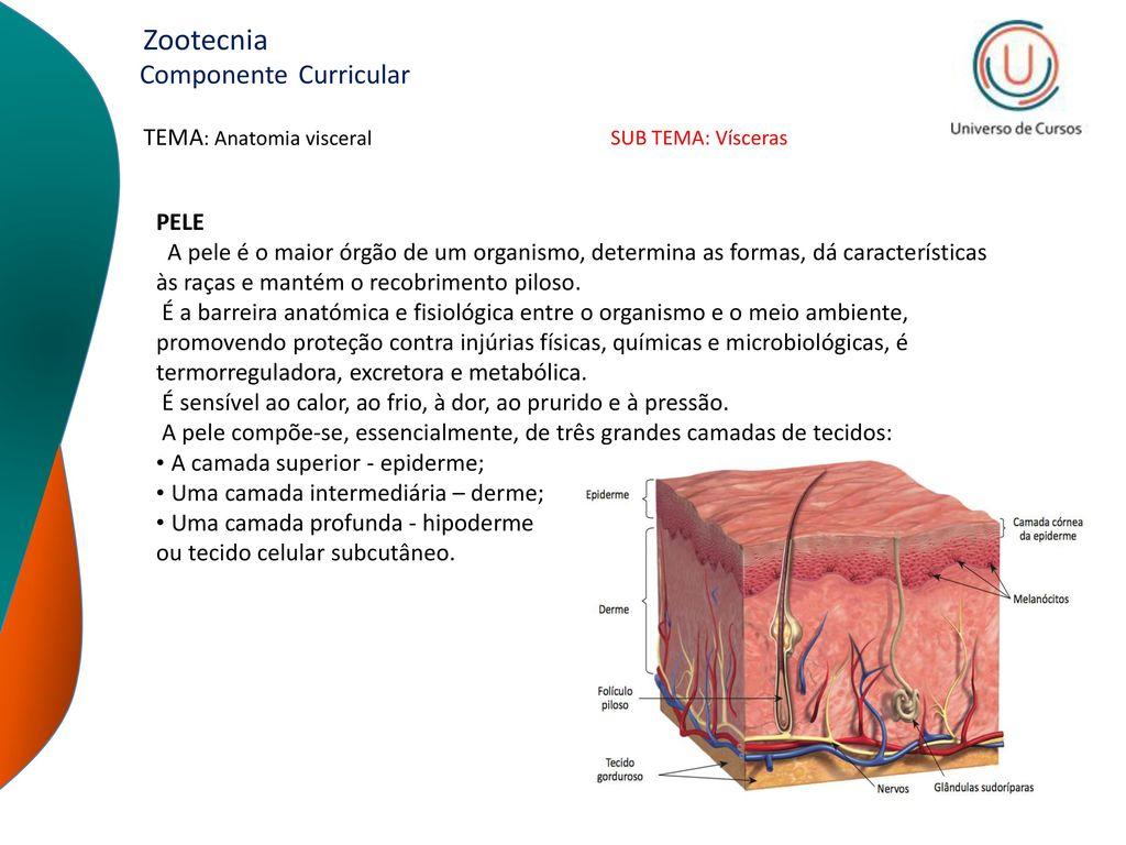 Único Grises Anatomía última Elaboración - Anatomía de Las ...