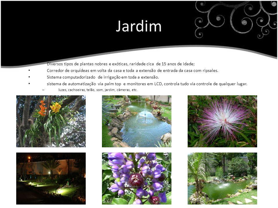 Jardim Diversos tipos de plantas nobres e exóticas, raridade cica de 15 anos de idade;