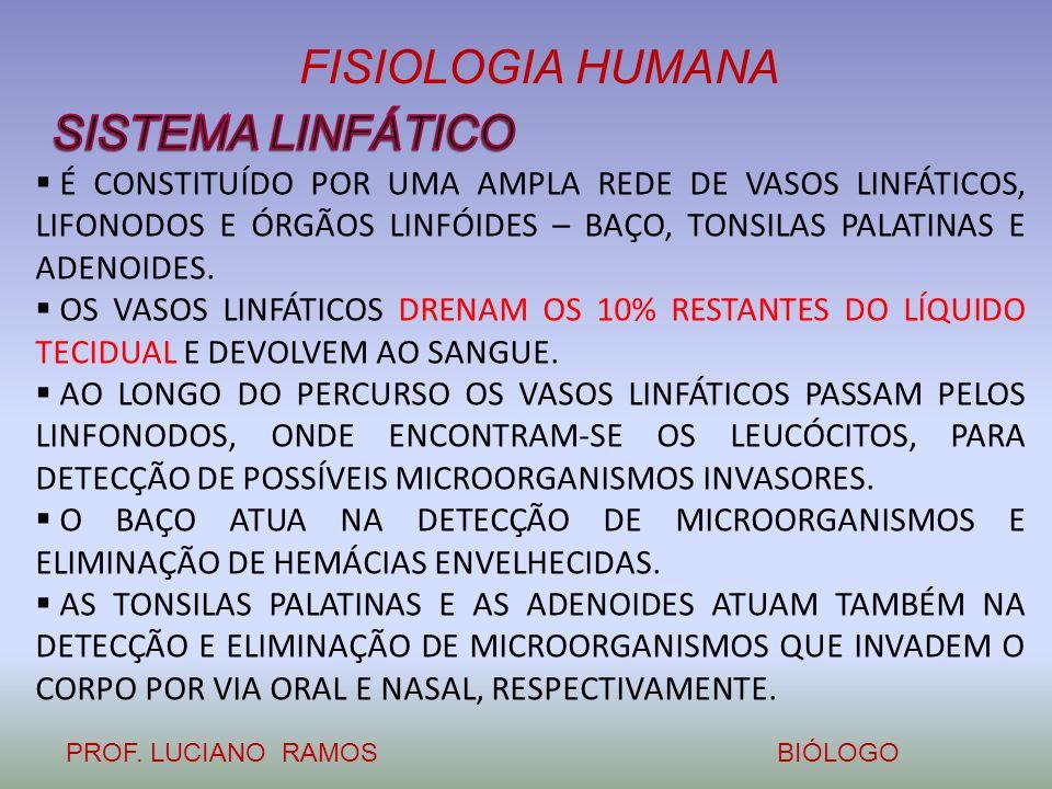 SISTEMA LINFÁTICO É CONSTITUÍDO POR UMA AMPLA REDE DE VASOS LINFÁTICOS, LIFONODOS E ÓRGÃOS LINFÓIDES – BAÇO, TONSILAS PALATINAS E ADENOIDES.