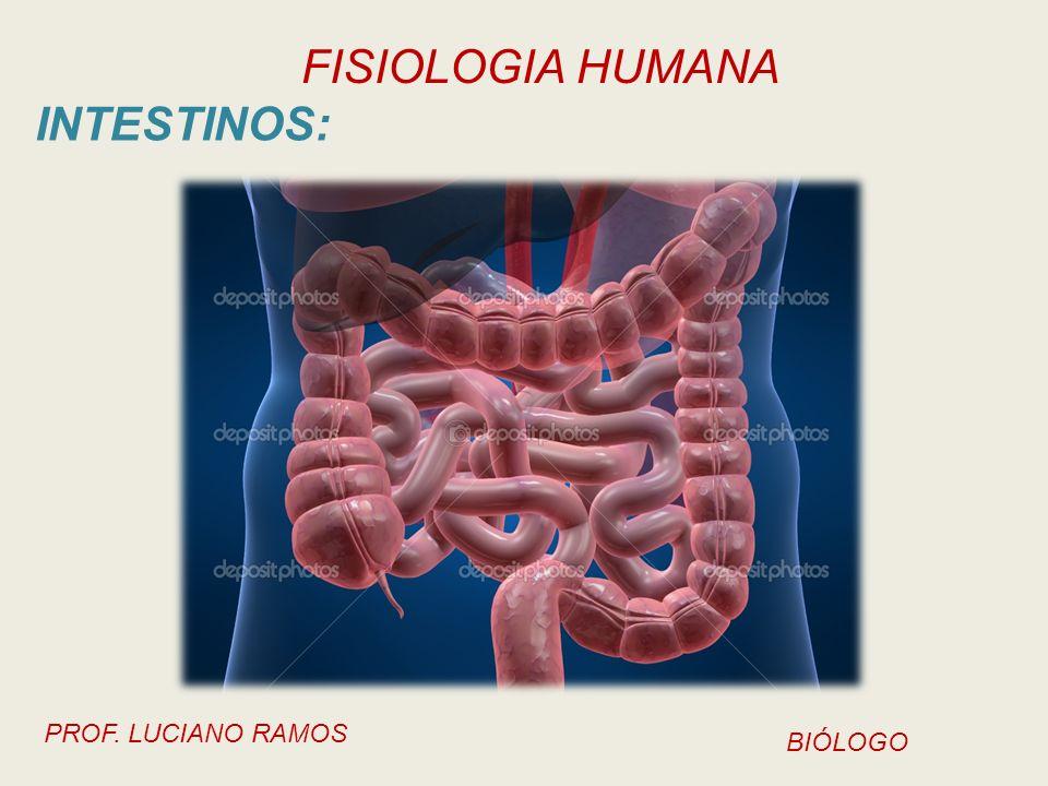 INTESTINOS:
