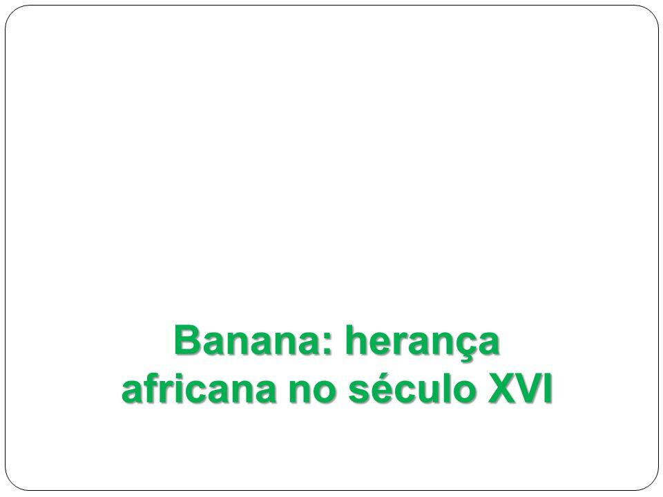 Banana: herança africana no século XVI