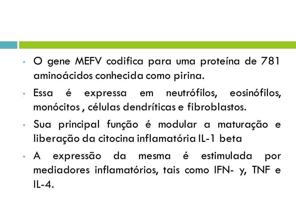 O gene MEFV codifica para uma proteína de 781 aminoácidos conhecida como pirina.