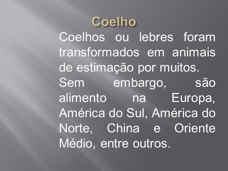 Coelho Coelhos ou lebres foram transformados em animais de estimação por muitos.