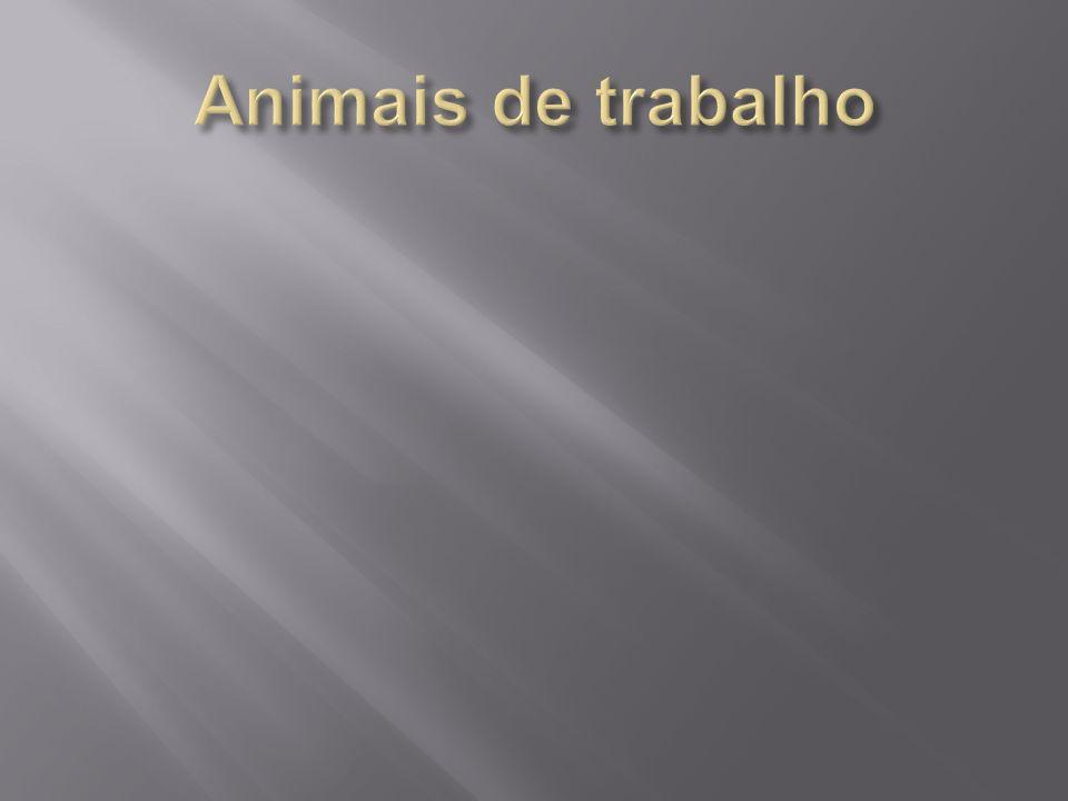Animais de trabalho