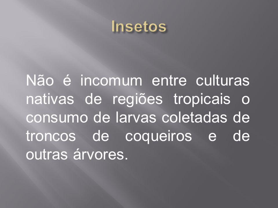 Insetos Não é incomum entre culturas nativas de regiões tropicais o consumo de larvas coletadas de troncos de coqueiros e de outras árvores.