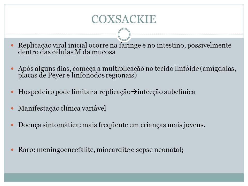 COXSACKIE Replicação viral inicial ocorre na faringe e no intestino, possivelmente dentro das células M da mucosa.