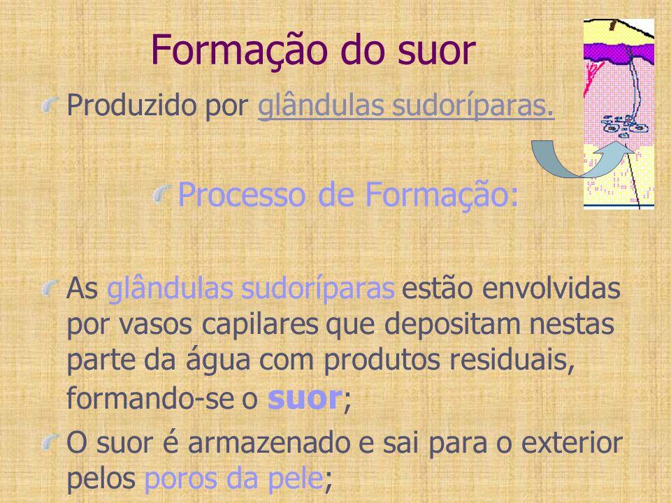 Formação do suor Processo de Formação: