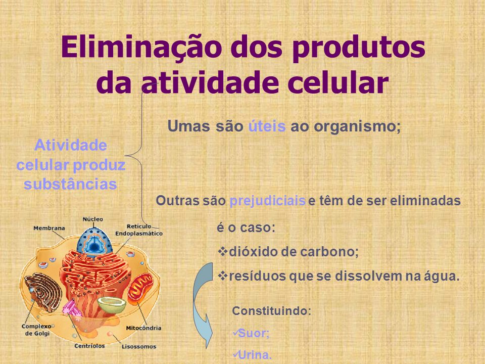 Eliminação dos produtos da atividade celular