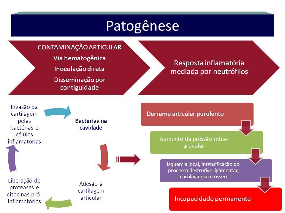 Patogênese Resposta inflamatória mediada por neutrófilos
