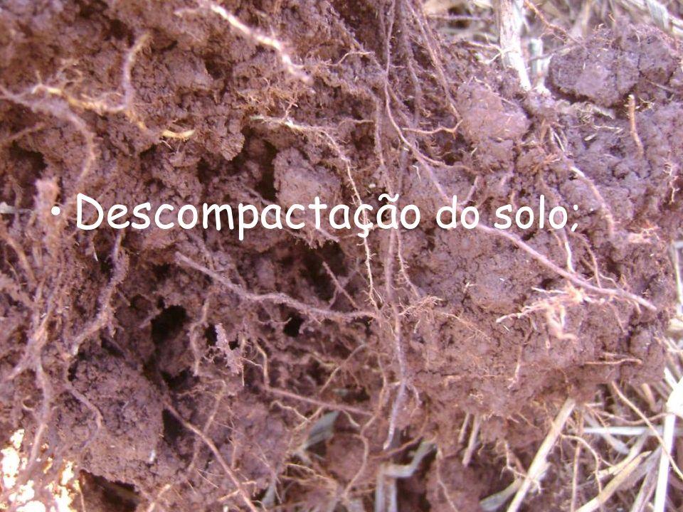 Descompactação do solo;