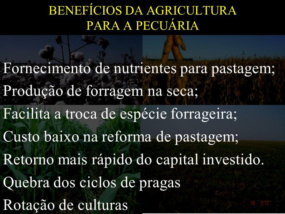 BENEFÍCIOS DA AGRICULTURA PARA A PECUÁRIA
