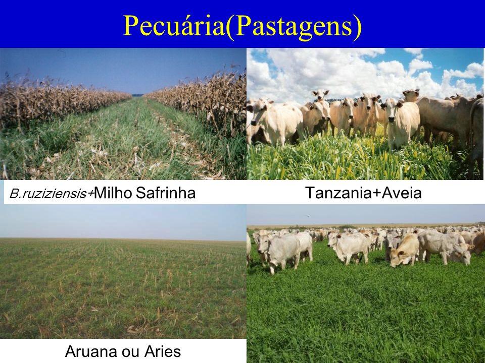 Pecuária(Pastagens) Tanzania+Aveia Aruana ou Aries