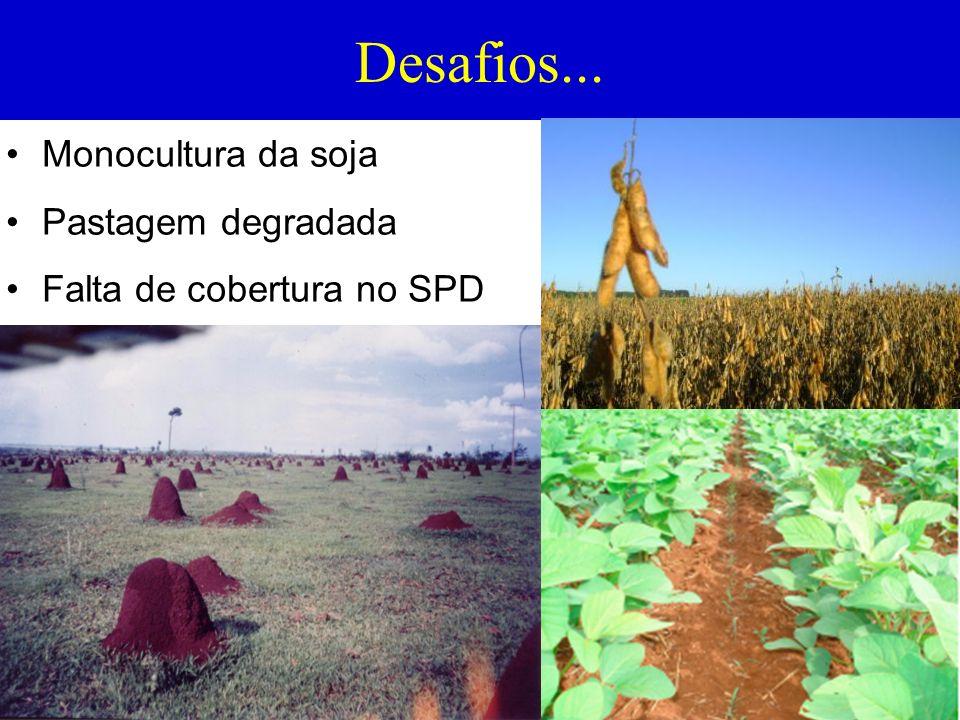 Desafios... Monocultura da soja Pastagem degradada