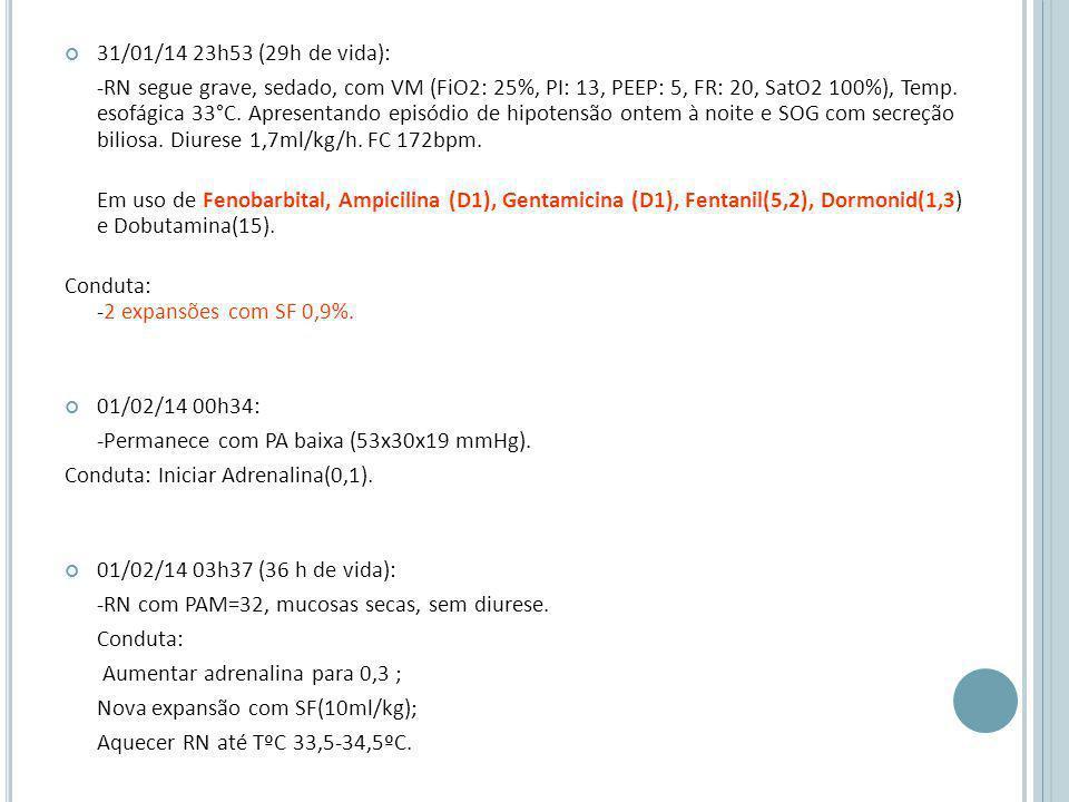 31/01/14 23h53 (29h de vida):