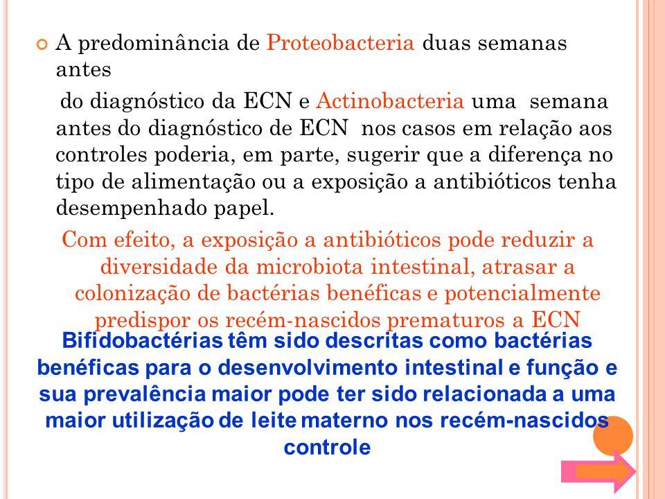 A predominância de Proteobacteria duas semanas antes