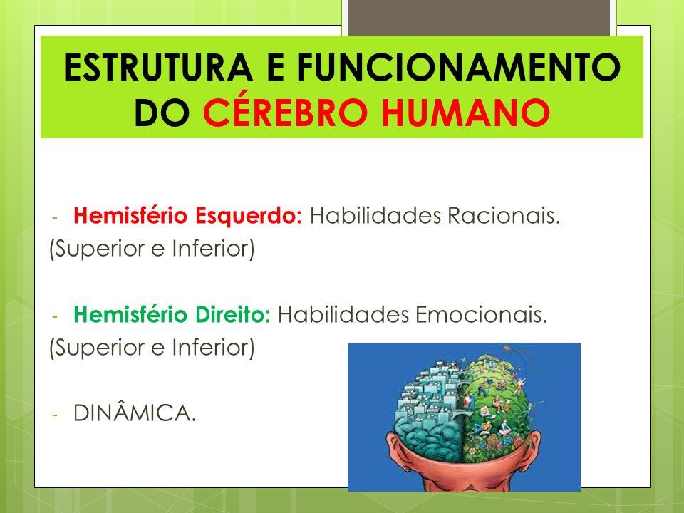 ESTRUTURA E FUNCIONAMENTO DO CÉREBRO HUMANO