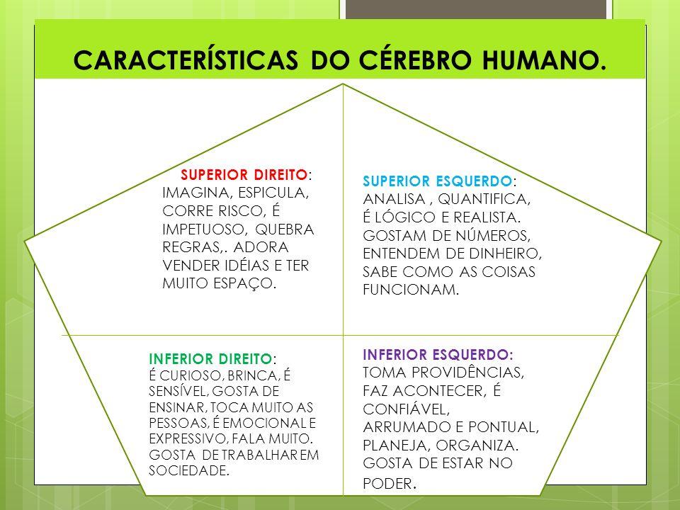 CARACTERÍSTICAS DO CÉREBRO HUMANO.