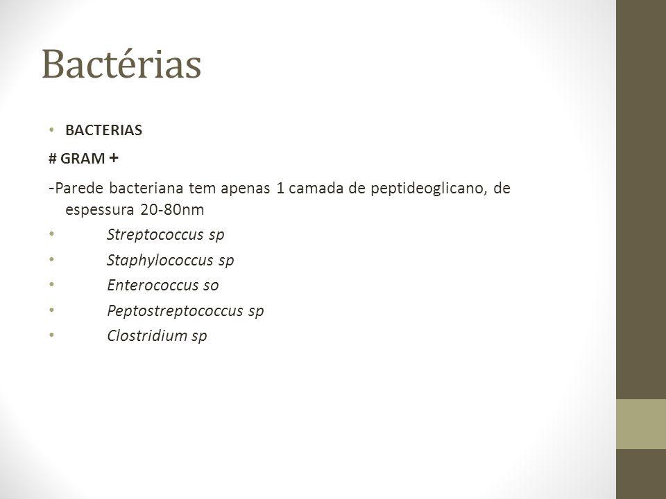 Bactérias BACTERIAS. # GRAM + -Parede bacteriana tem apenas 1 camada de peptideoglicano, de espessura 20-80nm.