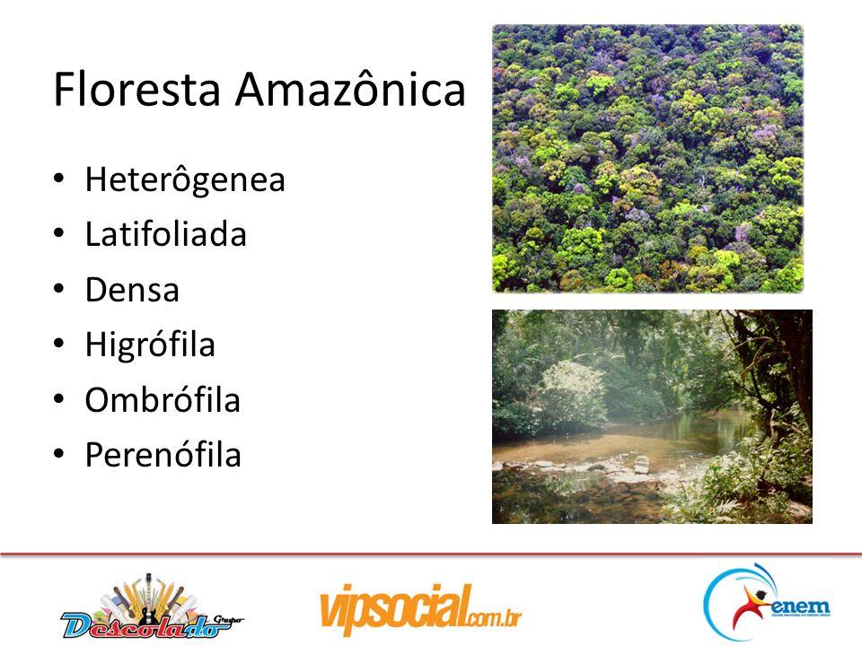 Floresta Amazônica Heterôgenea Latifoliada Densa Higrófila Ombrófila