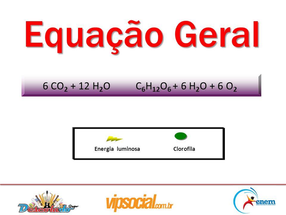 Equação Geral 6 CO2 + 12 H2O C6H12O6 + 6 H2O + 6 O2 Energia luminosa