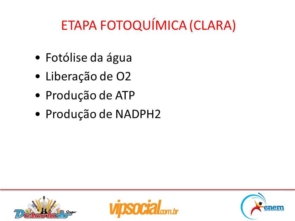 ETAPA FOTOQUÍMICA (CLARA)